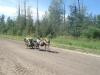 A 1000 km trip from Calgary to Edmonton